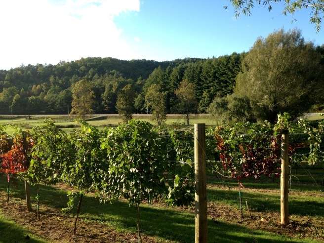 Five Wineries to Visit in North Georgia- Hightower Creek Vineyard- www.afriendafar.com- #hightowercreek #northgeorgiawineries