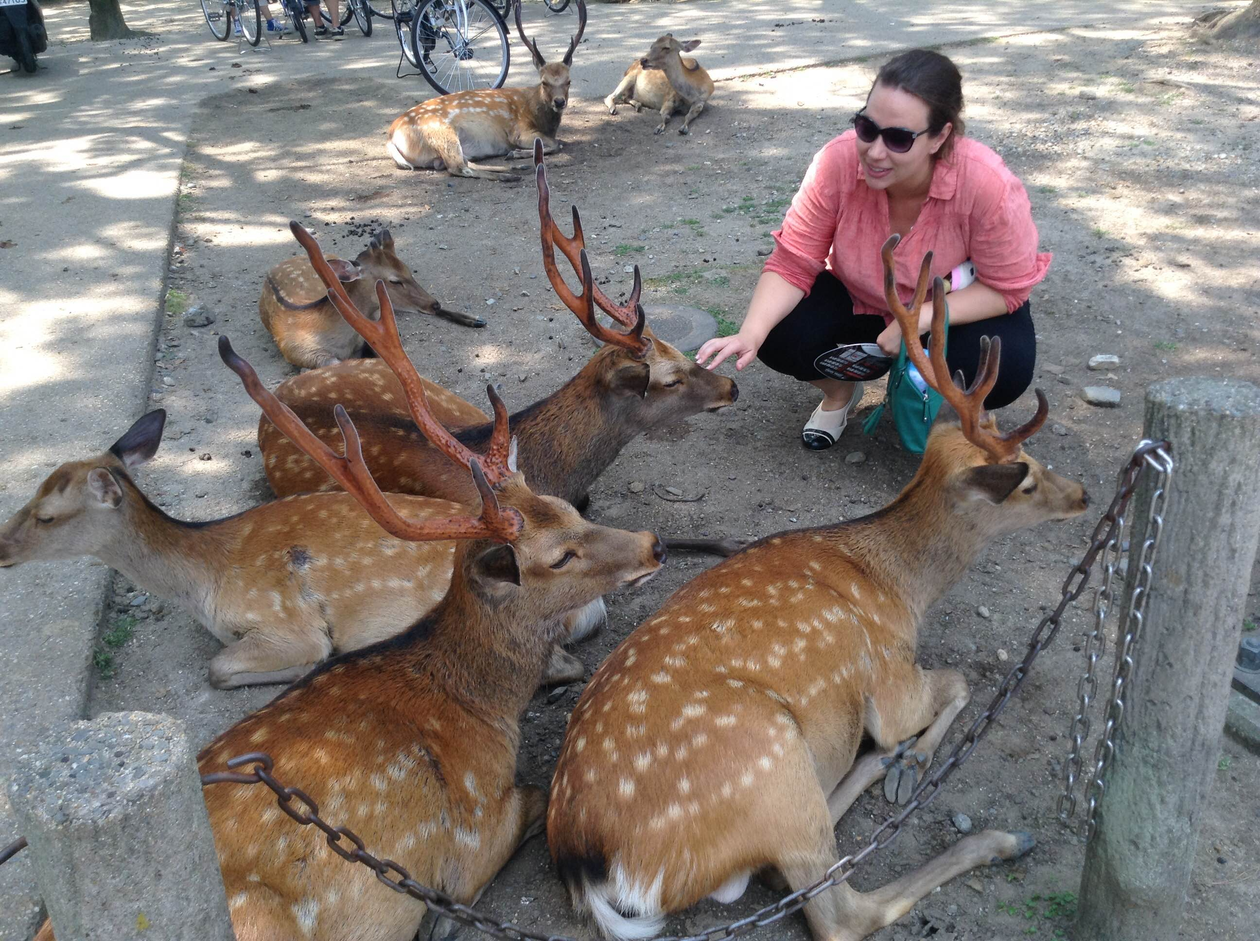 Feeding the Deer in Nara, Japan - www.AFriendAfar.com
